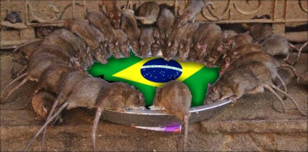 Janio de Freitas e o método dos ratos - TIJOLAÇO