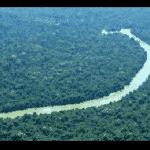 Os vira-latas e a questão ambiental, por Paulo Nogueira Batista Jr.
