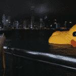O pato está murcho, não mexam com o pato
