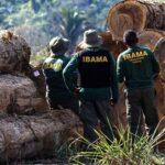 Corte no Meio-Ambiente é para derrubar Salles, Guedes ou a floresta?